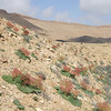 S Israel, C Negev Highlands, below Mizpe Arod