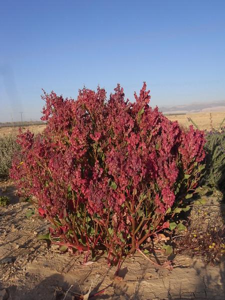 S Israel, Arava Valley, Faran