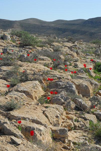 S Israel, Negev Desert - Halukim Ridge