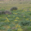 S Israel, C Negev Highlands, road to Lots Cisterns