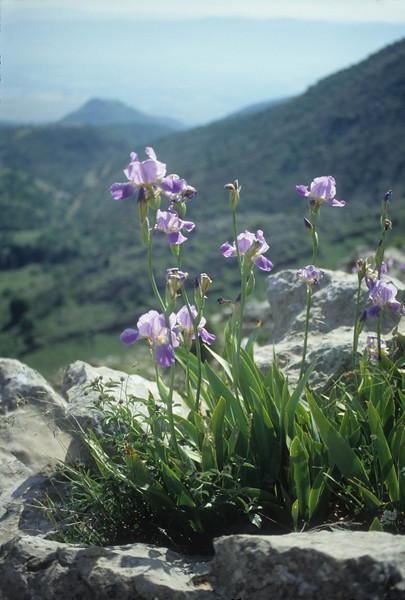 Mt Hermon, above Neve Ativ, 20/5/1992