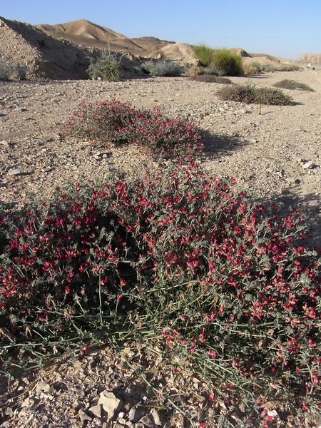 S Israel, Arava Valley, N of Km 101
