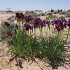 S Israel, Yerucham Iris Reserve