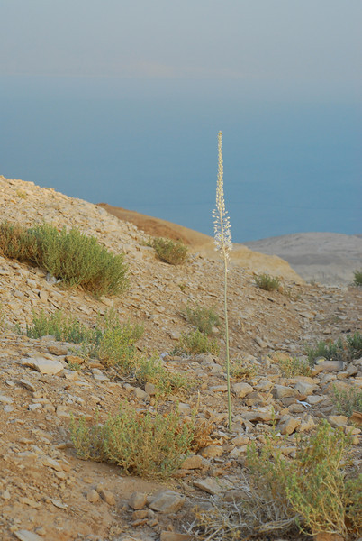 Dead Sea area, Mazokei Dragot view point