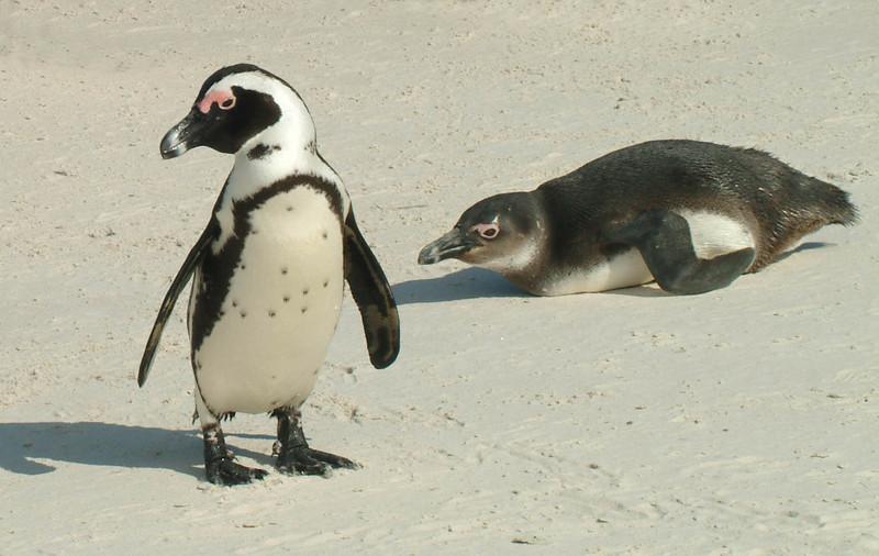 SA - Cape Peninsula