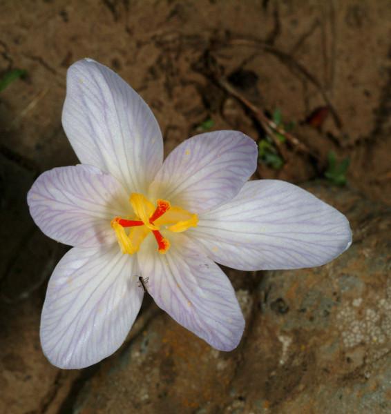 N Golan, Odem Forest