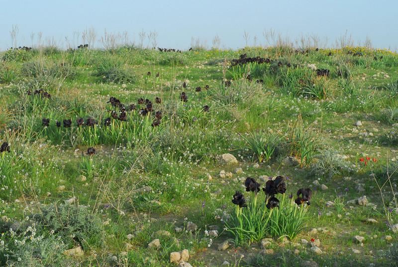 N Negev, Goral Hills