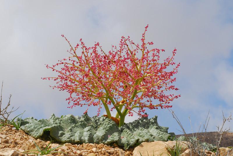 S Israel, C Negev Highlands, Mizpe Arod