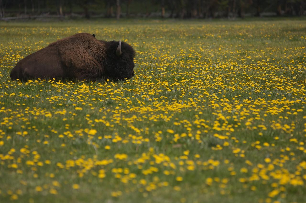 Yellowstone-2005
