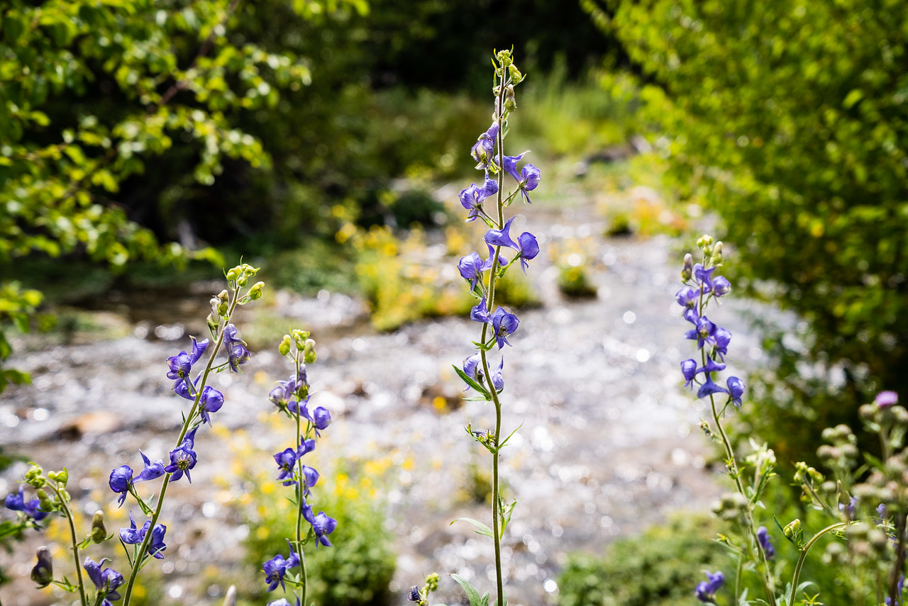 Flower at Cascade Springs