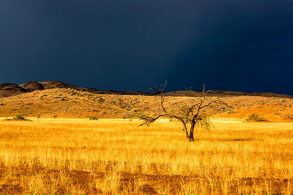 Namibia Golden Light