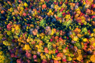 Fall Foliage Colors in Vermont