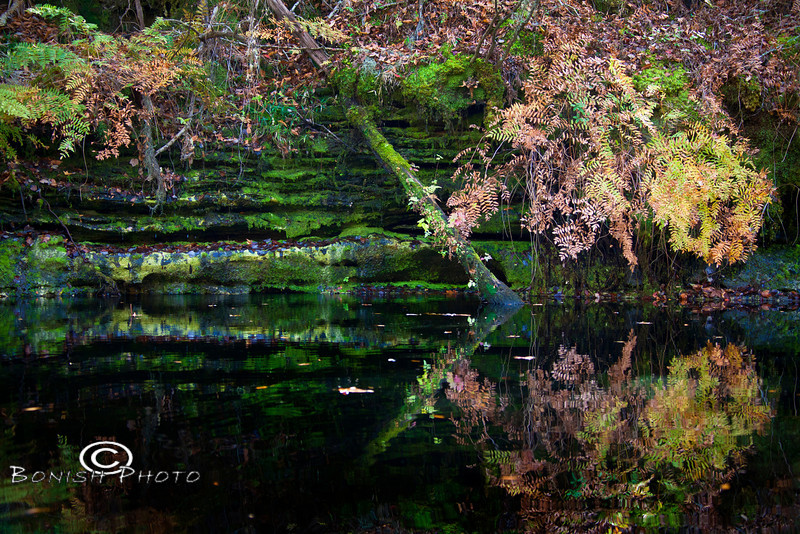 Swamp Reflections on the Suwannee River - December