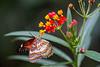 Butterfly garden, Victoria, BC