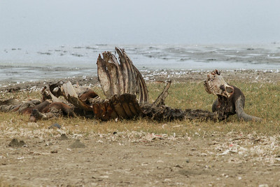Manyara NP Tanzania 2014 07 05 -2.JPG