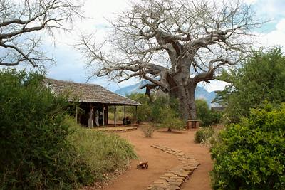 Mkomazi NP Tanzania 2014 07 02.JPG
