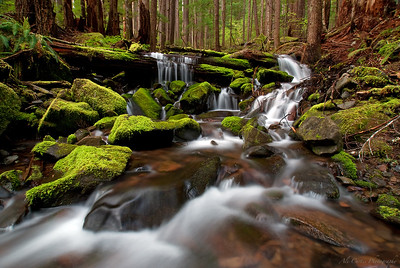 Quiet Tributaries Sol Duc Falls Tributaries Olympic National Park  The theme of this trip for me was 'water.' In two days I must have hiked twenty miles and driven 300. The rain never stopped which made it muddy, and slippery, and fun!  Immediately after taking this series of shots I turned to hike down the rocks with my camera and tripod on my shoulder when the slippery moss got the better of me.  In a successful effort to save the camera, I sacrificed my rear-end.  The bruise the size of a grapefruit made the 6 hour drive back to Seattle a little uncomfortable, but the photos were worth it.