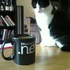 Kitty wants coffee?