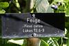 Ende Juni 2010 ist der Bibelgarten bei der Reformierten Kirche in Laufen am Rheinfall eingeweiht worden. Er zeigt viele Pflanzen, die in der Bibel Erwähnung finden © Patrick Lüthy/IMAGOpress.com