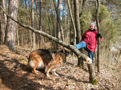Biber gefällte Bäume Biberbau
