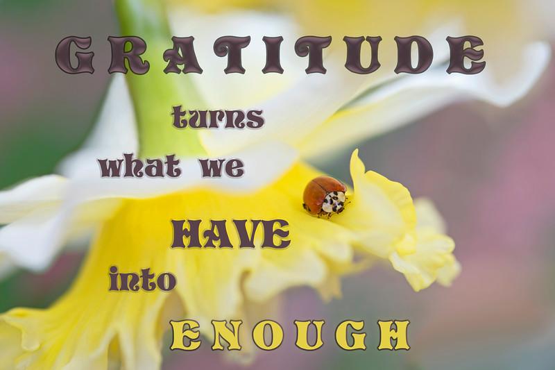 Gratitude Bug