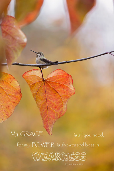 My Grace Is All You Need