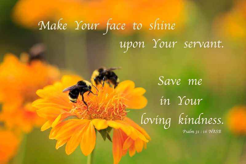 Make Your face to shine upon Your servant