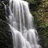 Berry Creek Falls.  IMG_0449.JPG