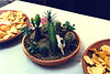 THE CACTUS BOWL<br /> <br /> A nice little assortment. The little skull adds a lot.
