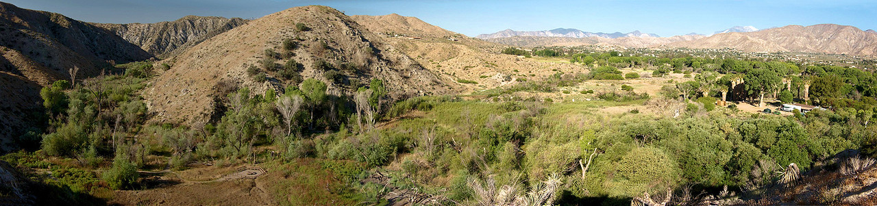 From the trip taken in May 2008. Here's a 5-photo panoramic stitch of Big Morongo Canyon Preserve. This upper part of the canyon is in the Mojave Desert, while the canyon itself on the left ends up in the lower-elevation Colorado Desert. This area, with its perennial stream, cottonwood and willow trees, is rich in upland and lowland birds. A disastrous fire swept through Big Morongo in 2005, but the area has since made a remarkable recovery.