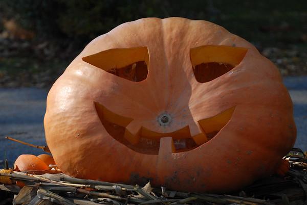 Big Pumpkin...Jack-O-Lantern!