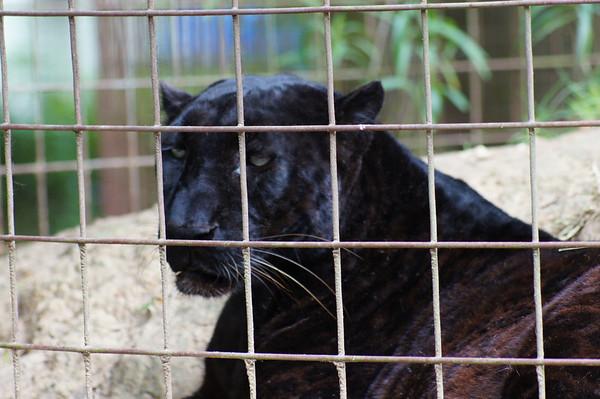big cat rescue tampa 3/24/12