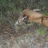 the deer.  RIP
