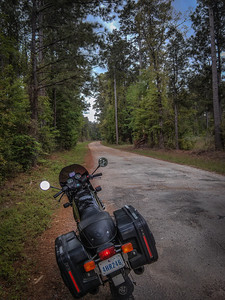 A backwoods detour leads to serious bayou swamp.