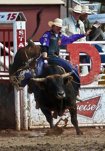 A bull rider attempts to hang on for the 8 seconds necessary during an event at the Calgary Stampede.