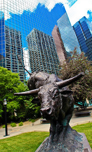 Office buildings (reflecting the buildings across the street) loom over a park with a statue of a long-horn bull in downtown Calgary, Canada.