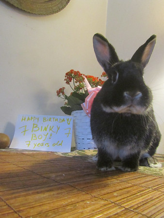Binky Boy turns 7 years old!