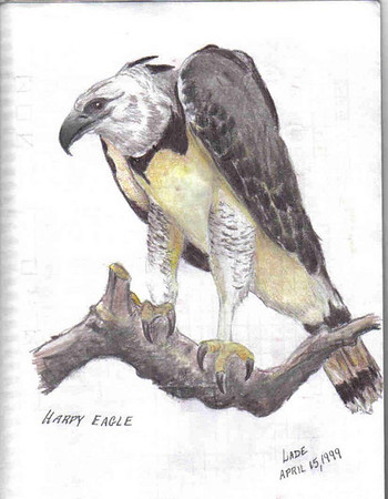 Harpy Eagle <br /> Art by Larry Lade