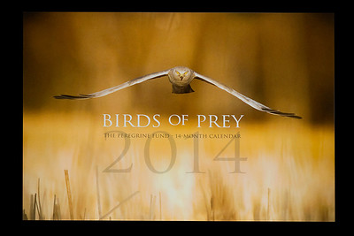 The Peregrine Fund's 2014 calendar cover