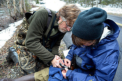John and Lisa banding a Harlequin Duck