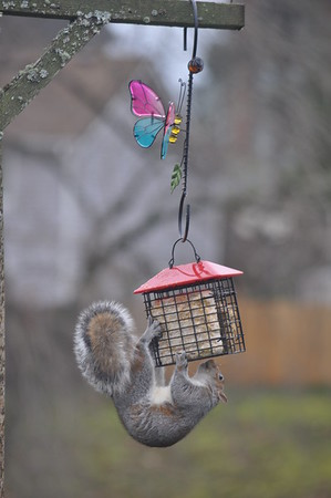 Bird Feeder Raider