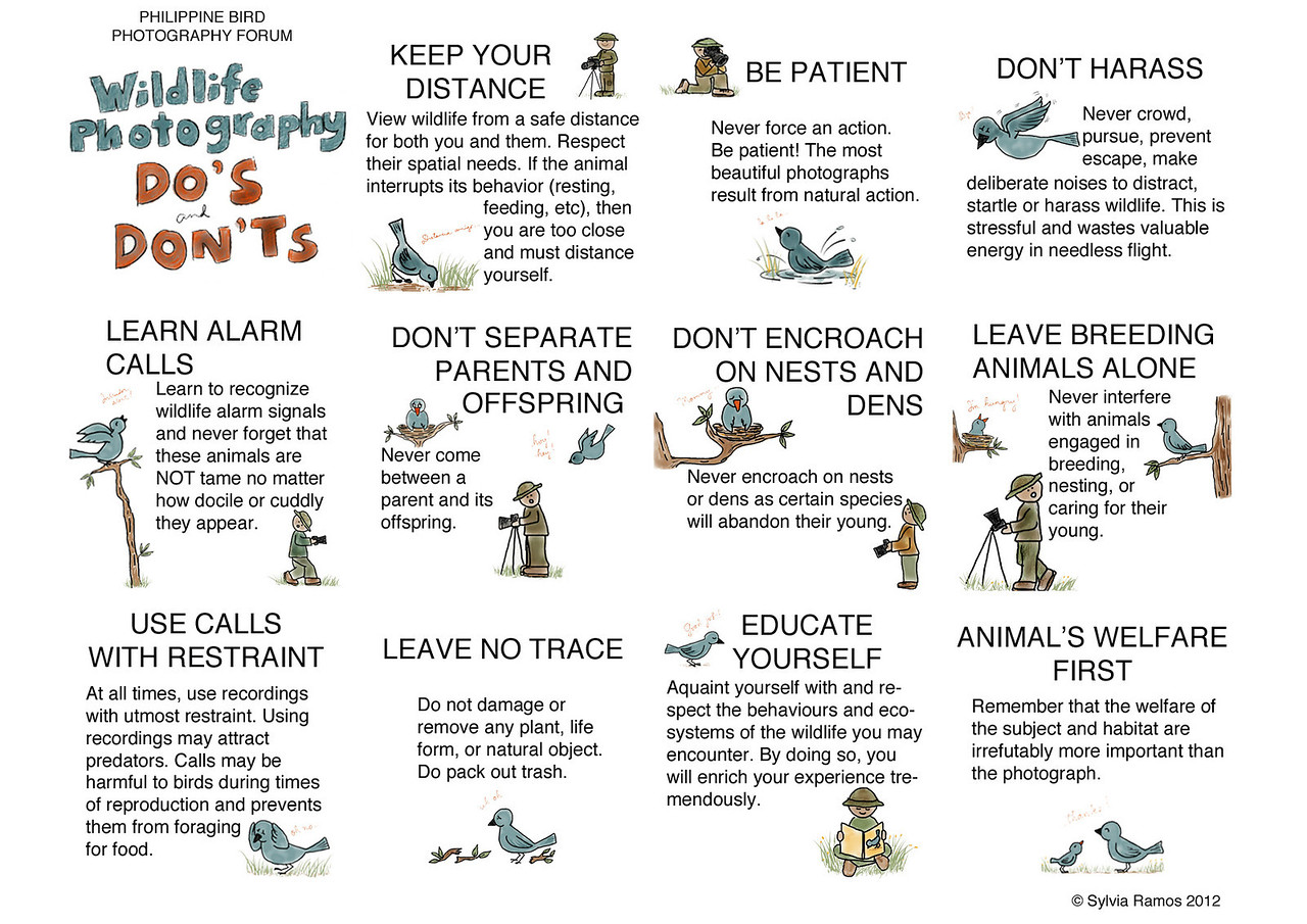 """This set of Do's and Don'ts was developed and is endorsed by the Philippine Bird Photography Forum. This serves as a baseline Code of Ethics to guide the members of the forum.  You are free to share, copy, download, or distribute this work as long as it is for non-commercial purposes and you attribute the author. You are not free to alter, build upon, or transform this work.  <a rel=""""license"""" href=""""http://creativecommons.org/licenses/by-nc-nd/3.0/""""><img alt=""""Creative Commons License"""" style=""""border-width:0"""" src=""""http://i.creativecommons.org/l/by-nc-nd/3.0/88x31.png"""" /></a><br /><span xmlns:dct=""""http://purl.org/dc/terms/"""" href=""""http://purl.org/dc/dcmitype/StillImage"""" property=""""dct:title"""" rel=""""dct:type"""">Wildlife Photography Do's and Don'ts</span> by <a xmlns:cc=""""http://creativecommons.org/ns#"""" href=""""http://tonjiandsylviasbirdlist.smugmug.com/"""" property=""""cc:attributionName"""" rel=""""cc:attributionURL"""">Sylvia Ramos</a> is licensed under a <a rel=""""license"""" href=""""http://creativecommons.org/licenses/by-nc-nd/3.0/"""">Creative Commons Attribution-NonCommercial-NoDerivs 3.0 Unported License</a>.<br />Based on a work at <a xmlns:dct=""""http://purl.org/dc/terms/"""" href=""""http://tonjiandsylviasbirdlist.smugmug.com/Other/Bird-Photography-Ethics/24354480_KV4mPm"""" rel=""""dct:source"""">http://tonjiandsylviasbirdlist.smugmug.com/Other/Bird-Photography-Ethics/24354480_KV4mPm</a>."""