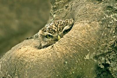 Bird Photos: Owls and Raptors
