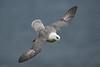 Fulmar 3 Shetland April 2013