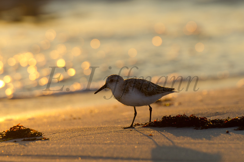 http://ericliffmann.smugmug.com/Other/Bird-Portraits/i-R2JFc5W/0/L/DSC_7489-L.jpg
