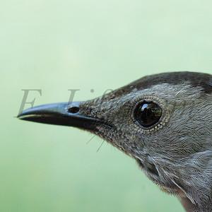 Bird Portraits