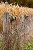 Boot Birdhouses on Fencepost, Rock County, Wisconsin