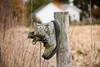 Boot Birdhouse on Fencepost, Rock County, Wisconsin