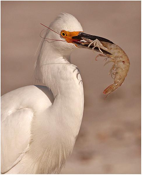 4-25-11- Shrimp Dinner