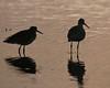 Birds: Feed/Swim/Wade:  Silhouettes